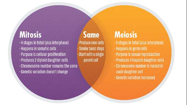 Mitosis Vs  Meiosis  Key Differences, Chart And Venn Diagram