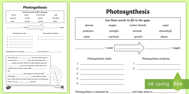 Photosynthesis Worksheet Answer Key Division Worksheets Rock Cycle
