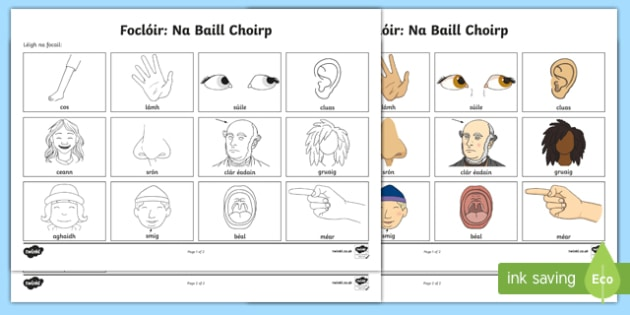 Parts Of The Body Vocabulary Worksheet   Worksheet Gaeilge