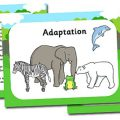 Adaptations Worksheets Middle School
