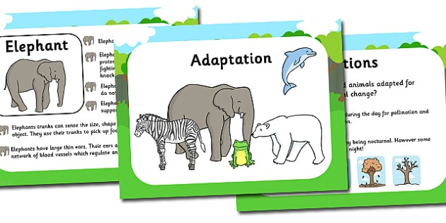 Adaptation Powerpoint And Worksheets Pack