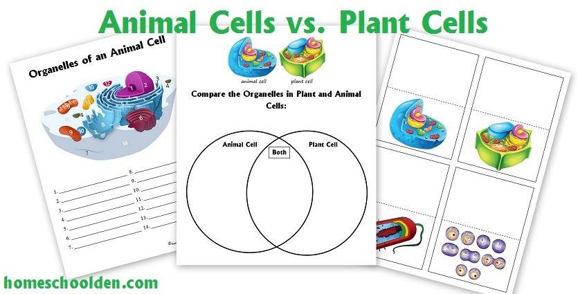 Transform 4th Grade Worksheets On Plant And Animal Cells About