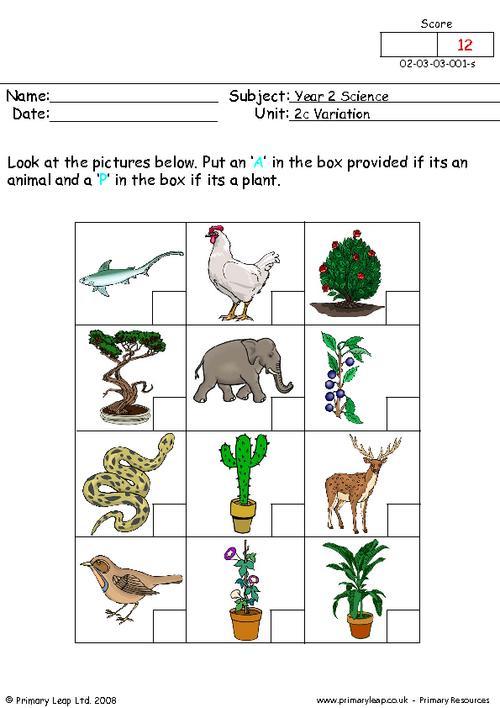 Basic Needs Of Animals Worksheets  Best Images Of Plant Needs