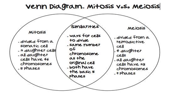 Mitosis Vs  Meiosis Venn Diagram Comparing And Contrasting Mitosis