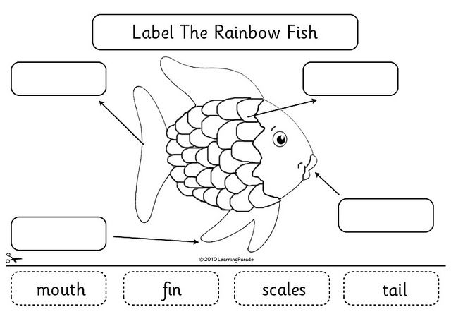 Parts Of A Fish Diagram For Kids