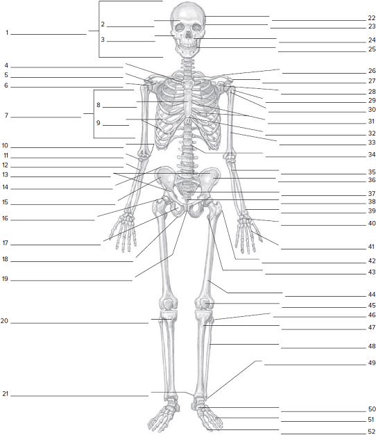 Anterior Skeletal Worksheeton The Anterior Skeletal Wor