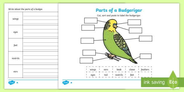 Parts Of A Budgie Differentiated Worksheet   Worksheets