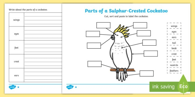 Parts Of A Cockatoo Differentiated Worksheet   Worksheets