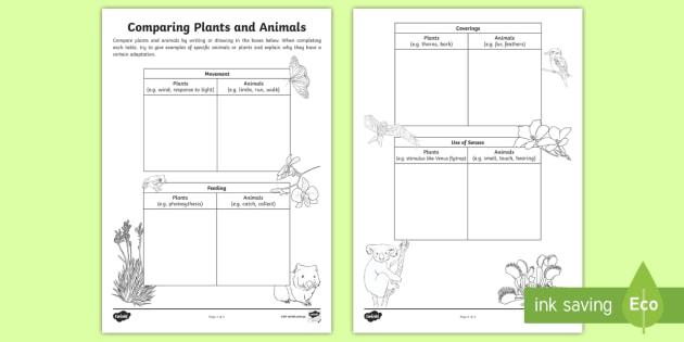 Comparing Plants And Animals Worksheet   Worksheet