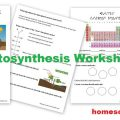 Photosynthesis Worksheets For High School