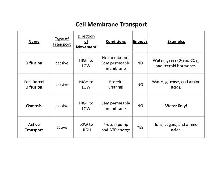Transport Across Cell Membrane Worksheets Answers