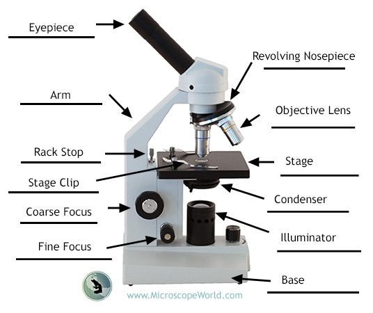 Pin On Science Activities With Microscopes