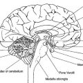 Brain Anatomy Worksheets