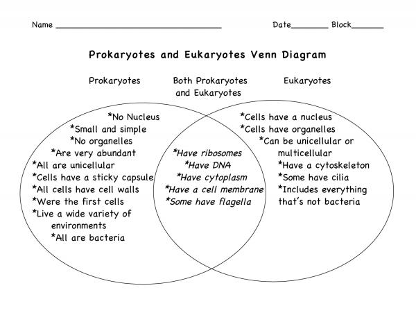 Venn Diagram Comparing Prokaryotic And Eukaryotic Cells