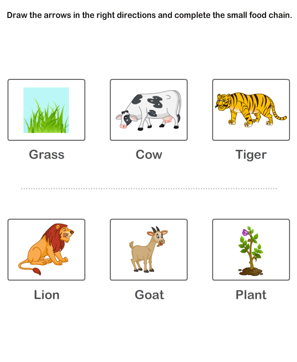 Food Chain Worksheets 3rd Grade