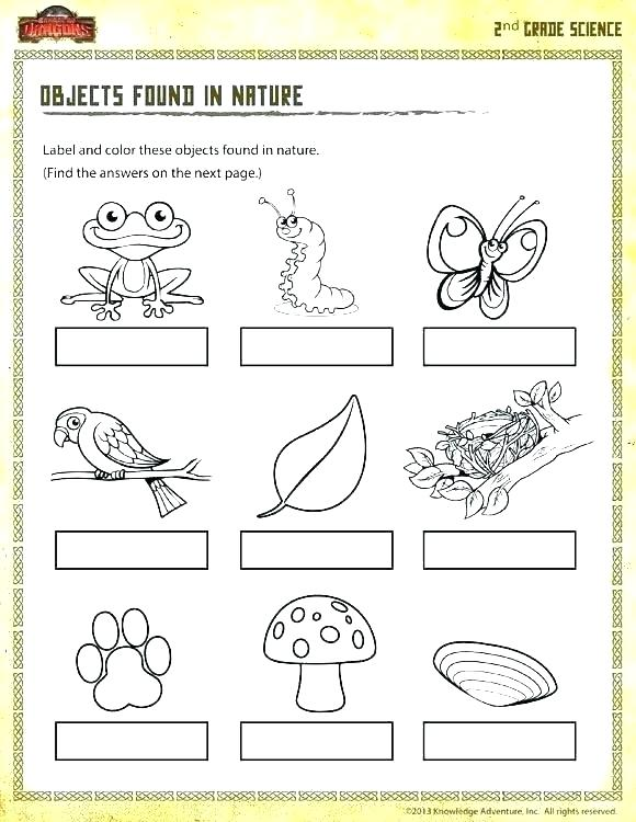 Grade 2 Science Worksheets Animals Grade Science Worksheets Shot