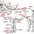 Parts Of A Horse Worksheets