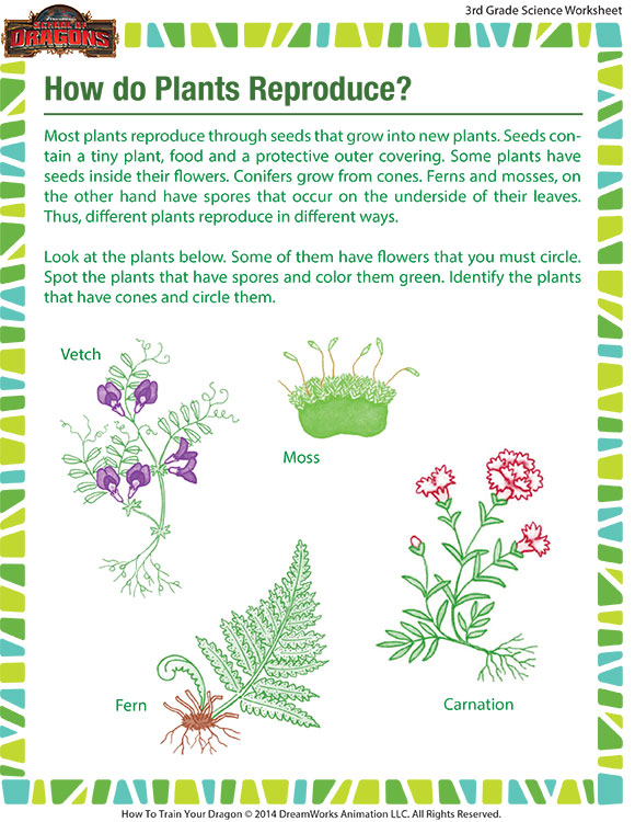 How Do Plants Reproduce  Worksheet – Grade 3 Printable – Sod