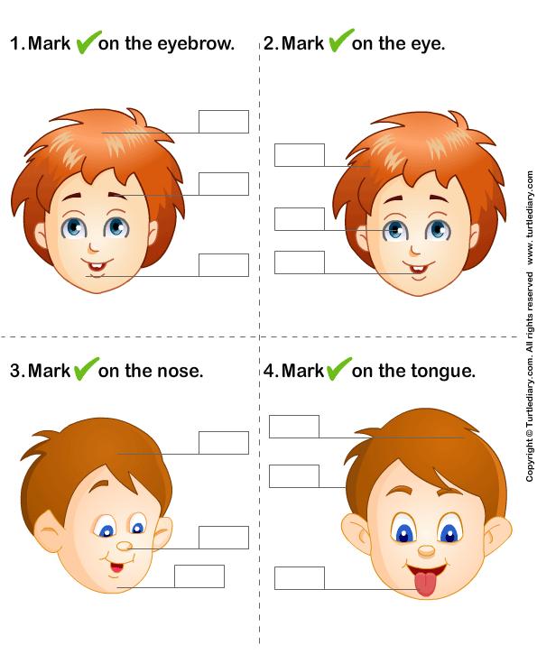 Human Body Face Parts Names Worksheet