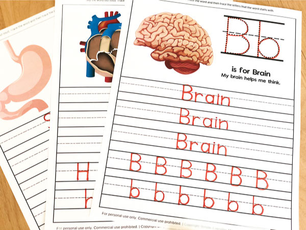 Human Body Worksheets For Kindergarten & Up