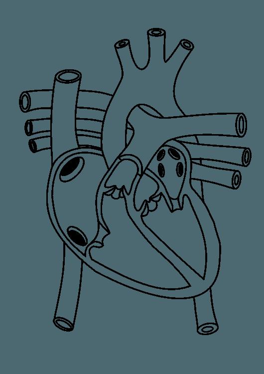 Shoe,line Art,angle Png Clipart