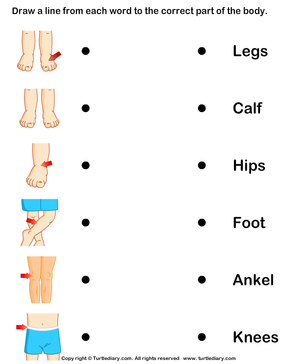 New Worksheet For Preschool Body Parts