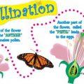 Pollination For Kids Worksheets