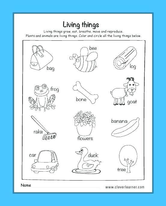 Science Worksheets For Kids