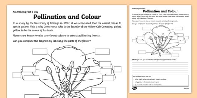Pollination And Color Worksheet   Worksheet