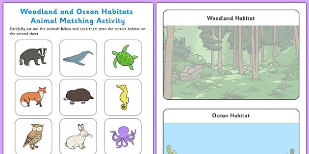 Woodland And Ocean Habitats Animal Sorting Worksheet   Worksheet