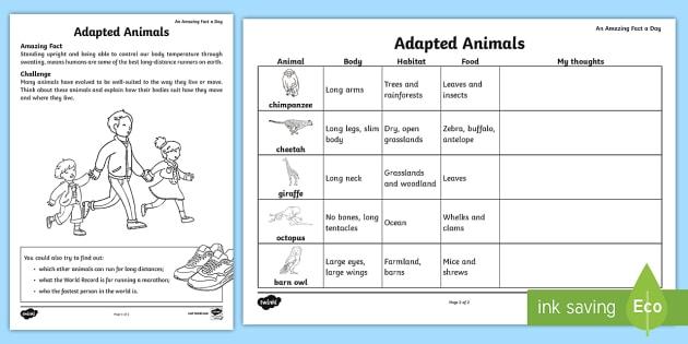 Adapted Animals Worksheet   Worksheet
