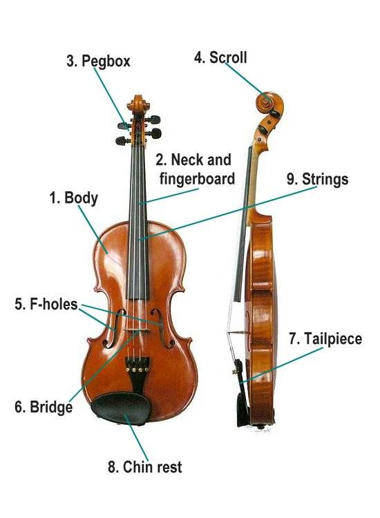Music For Kids  Parts Of The Violin