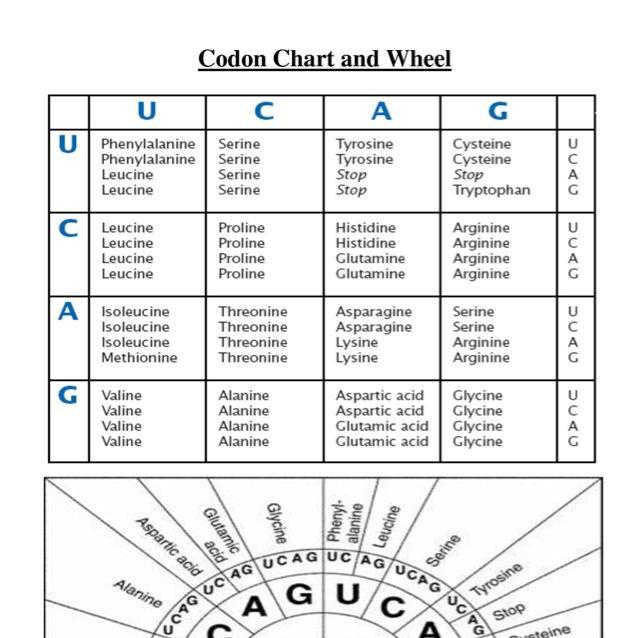 30 Rational Codon Wheel Printable