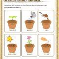 Plant Worksheets For 2nd Grade