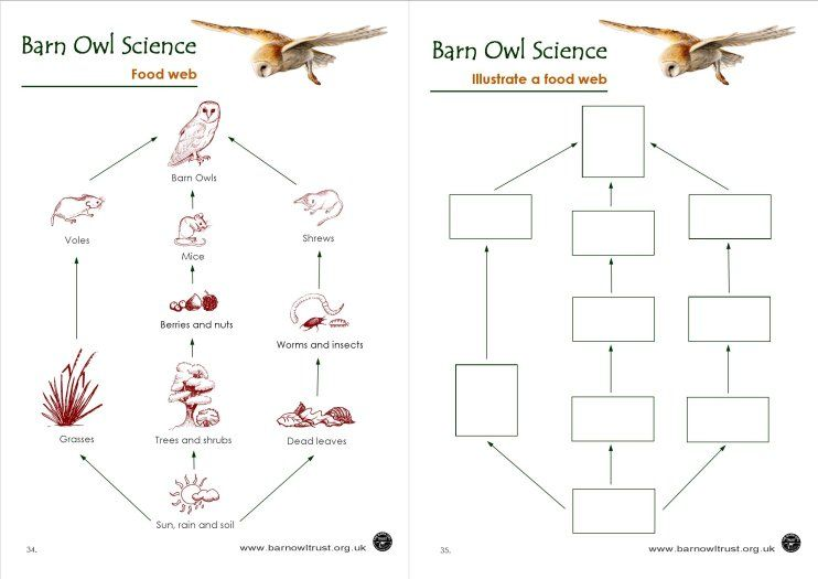 Barn Owl Conservation  Science Educational Resources