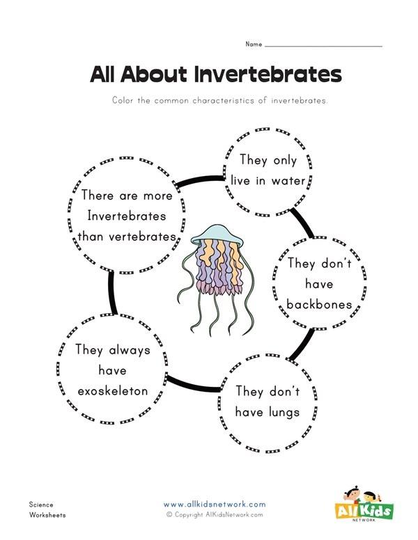 All About Invertebrates Worksheet