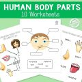 Worksheets Parts Of The Body Pdf