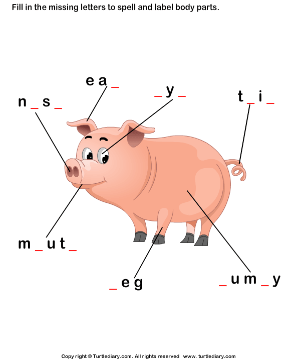 Body Parts Of Pig Worksheet