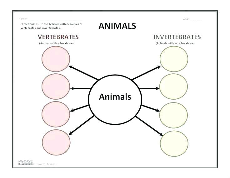 Vertebrates And Invertebrates Worksheets – Danielderidder Info