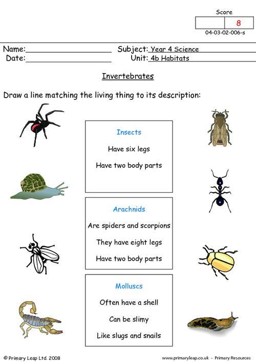 Invertebrates 1