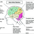 Brain Structures And Functions Worksheets
