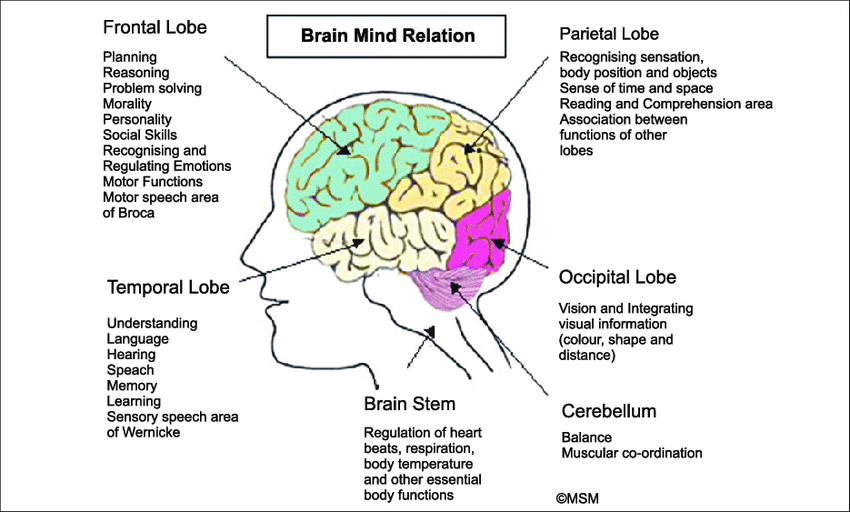 Brain Association Witht He Senses