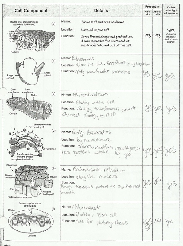 Cells And Organelles Worksheet