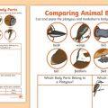 Animal Parts Worksheets