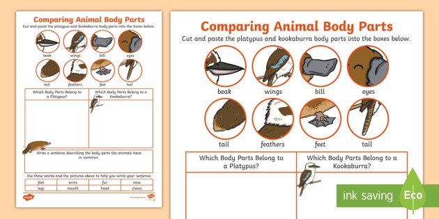 Comparing Animal Body Parts Worksheet