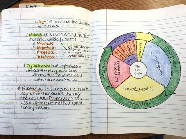 Cell Coloring Worksheet Middle School – Highfiveholidays Com