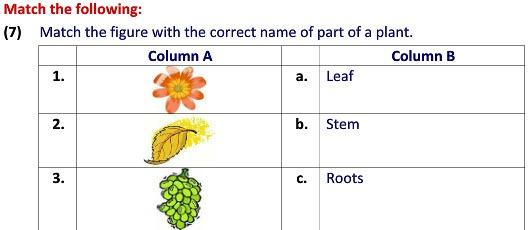 Online Evs Practice Worksheets Types Of Plants Worksheets For