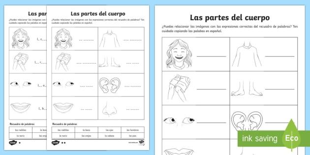 Las Partes Del Cuerpo My Body Parts Worksheet   Worksheet Spanish