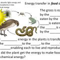 Energy Chain Worksheets