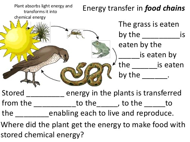 Collection Free Food Chain Worksheets Photos,